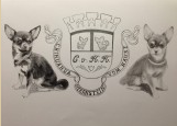 thumb_Chihuahua
